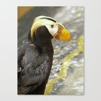 puffin Canvas Prints featuring Puffin... by Nature In Art...