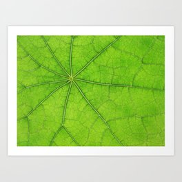 Green Leaf Veins 03 Art Print