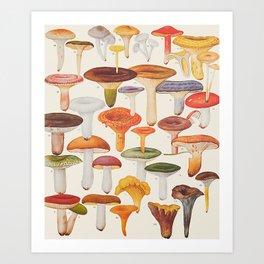 Les Champignons Mushrooms Art Print