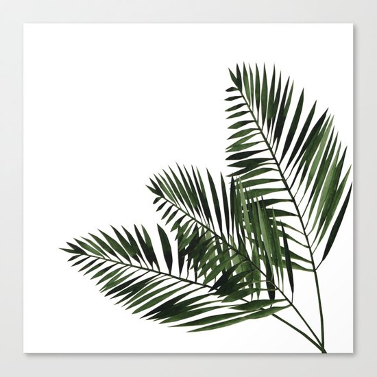 Tropical Exotic Palm Leaves I Canvas Print