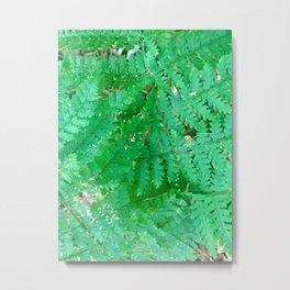 Adirondack Ferns Metal Print