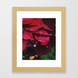 Rose Rain Framed Art Print