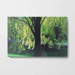Caitlin's Tree Metal Print