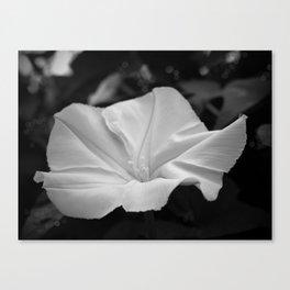 Midnight in the Garden, Moonflower at night Canvas Print