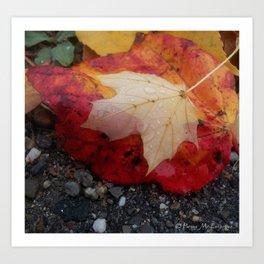 Dewy Maple Leaf Art Print