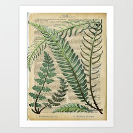 Book Art Page Botanical Leaves Art Print