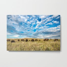 Grazing - Bison Graze Under Big Sky on Oklahoma Prairie Metal Print