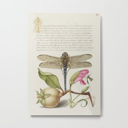Dragonfly Pear Carnation and Insect from Mira Calligraphiae Monumenta or The Model Book of Calligrap Metal Print
