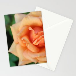 Single rose flower blooming Stationery Cards