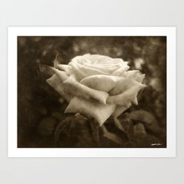 Pink Roses in Anzures 6 Antiqued Art Print
