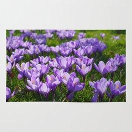 Purple Crocuses Rug