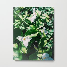 Garden Lilys Metal Print