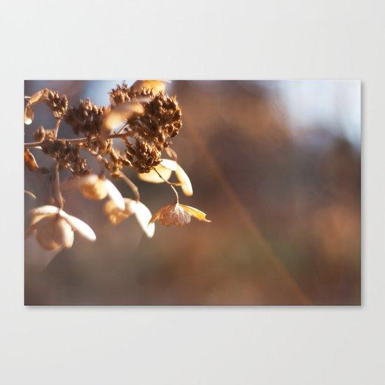 Butterflies in December Canvas Print