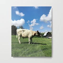 Tethered Cow Metal Print