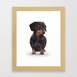 Dog-Dachshund Framed Art Print