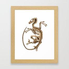 Raptor Skeleton Framed Art Print