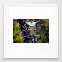 Silver Butterfly   Framed Art Print
