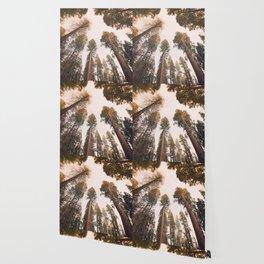Sequoia Sunset Wallpaper