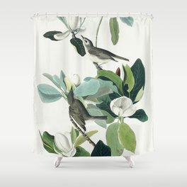 Warbling Flycatcher from Birds of America (1827) by John James Audubon etched by William Home Lizars Shower Curtain