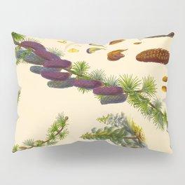 Vintage Scientific Illustration Himalayan Pine trees Pine Cone Scientific Illustration Pillow Sham