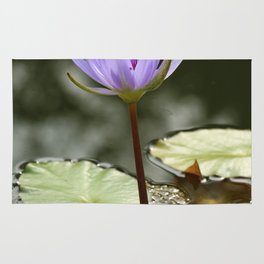 Beauty At The Pond Rug