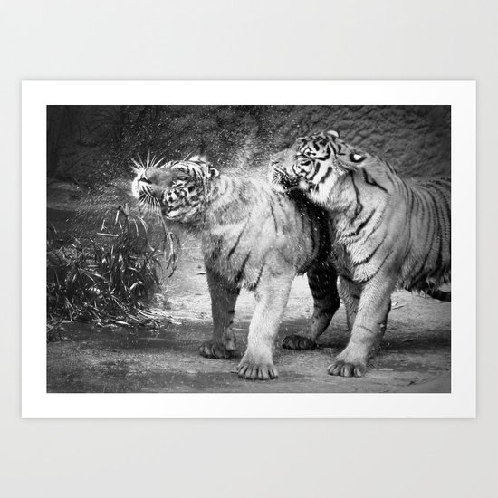 little tigers Art Print