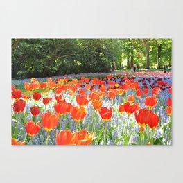 Sunny Tulips Canvas Print
