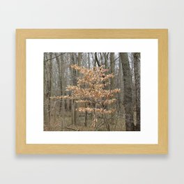 Beautful tree in John Heinz Wildlife Refuge Framed Art Print