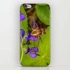 Hummingbird Moth iPhone & iPod Skin