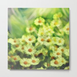 """""""Spring of daisies, green and sunlight"""" Metal Print"""