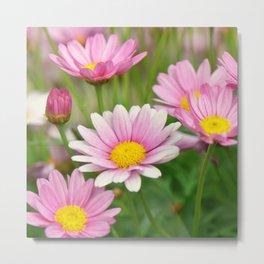 Daisy pink 090 Metal Print