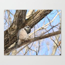 Sizing you up Canvas Print