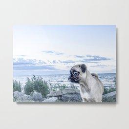 A Pug and a Beach Metal Print