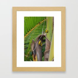 Sunbird Love Framed Art Print
