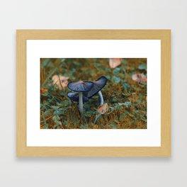 Common Ink-cap Framed Art Print