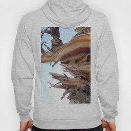 Trees twisting in the wind Hoody