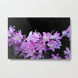 Amaryllis Belladonna Pink Flowers Bouquet Metal Print
