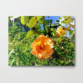 Hyde Park Flowers Metal Print