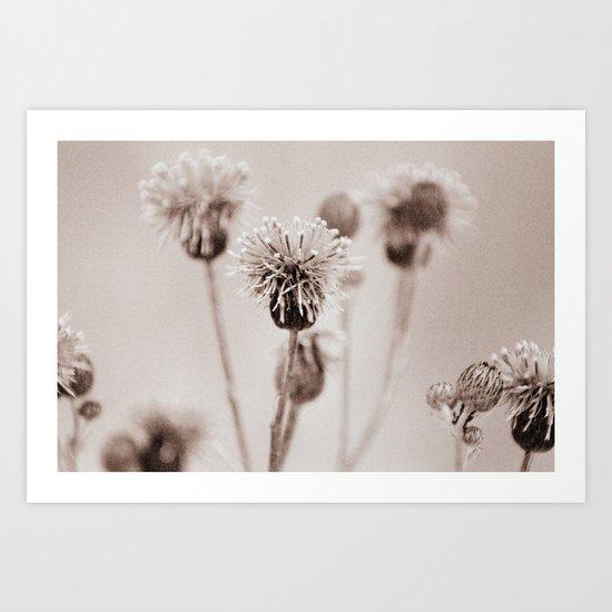 Cirsium 4009 Art Print