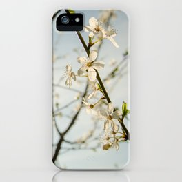 White Blossom, Blue Skies iPhone Case