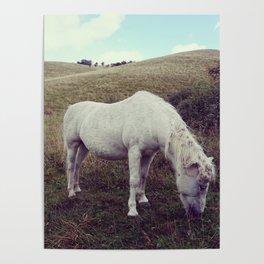 Pony Grazing Poster