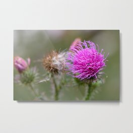Thistle flower Metal Print