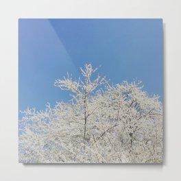 White blossoms in Stuttgart, Germany Metal Print