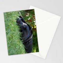 buller Stationery Cards