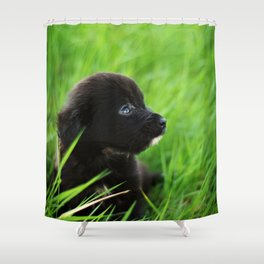 Shelter Puppy Shower Curtain