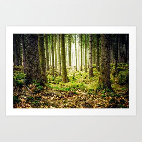 A Fairytale Forest Art Print