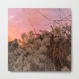 Winter Sunset And Clematis Vines Metal Print