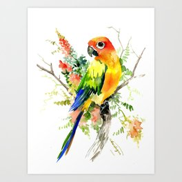 Sun Conure Parakeet, tropical colors parrot art design Art Print