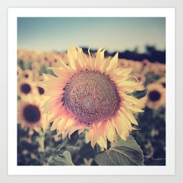 """Sunflowers"" Vintage dreams. Square Art Print"