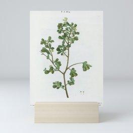European buckthorn, Rhamnus buxifolius from Traité des Arbres et Arbustes que l'on cultive en France Mini Art Print
